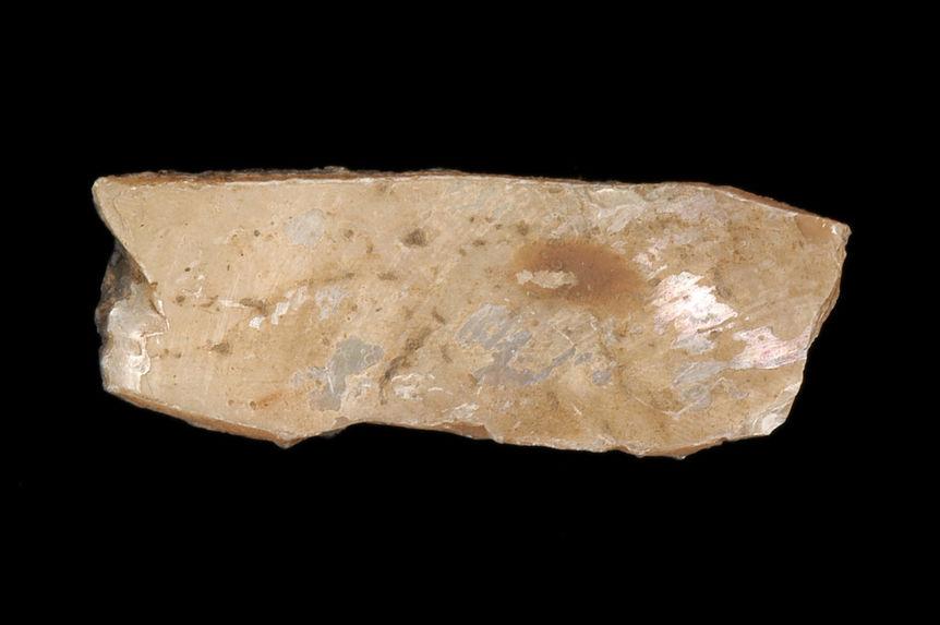 Coquillage (fragment)