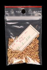 Echantillon végétal : blé et orge
