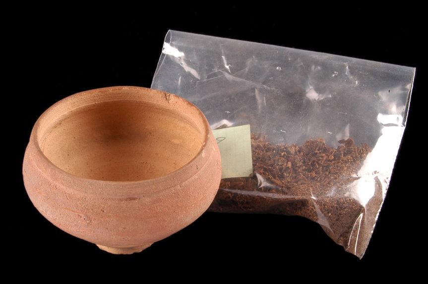 Coupe avec échantillon végétal