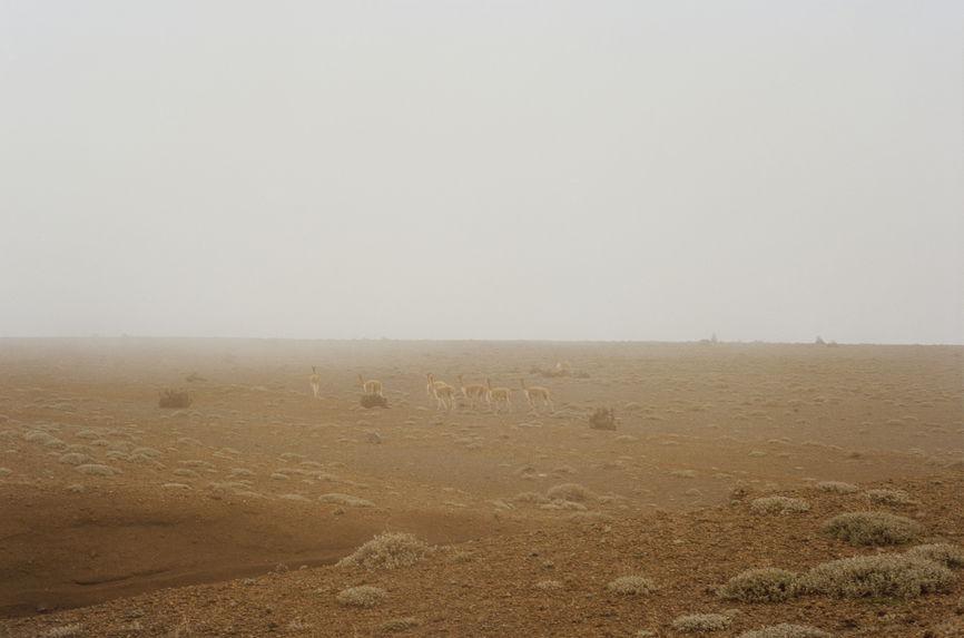 Paramo and llamas