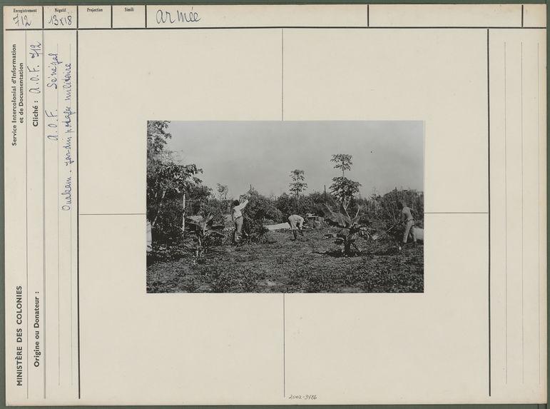 Jardin potager militaire