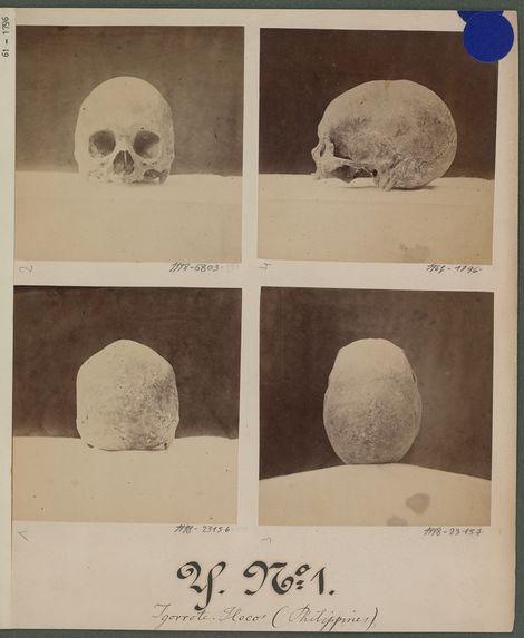 Crânes