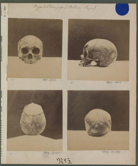 Crâne Négrito
