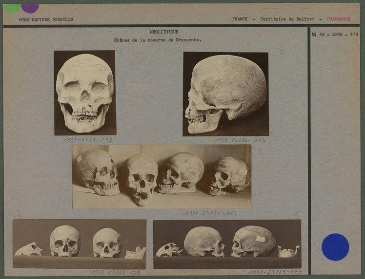 Crânes de la caverne de Cravanche