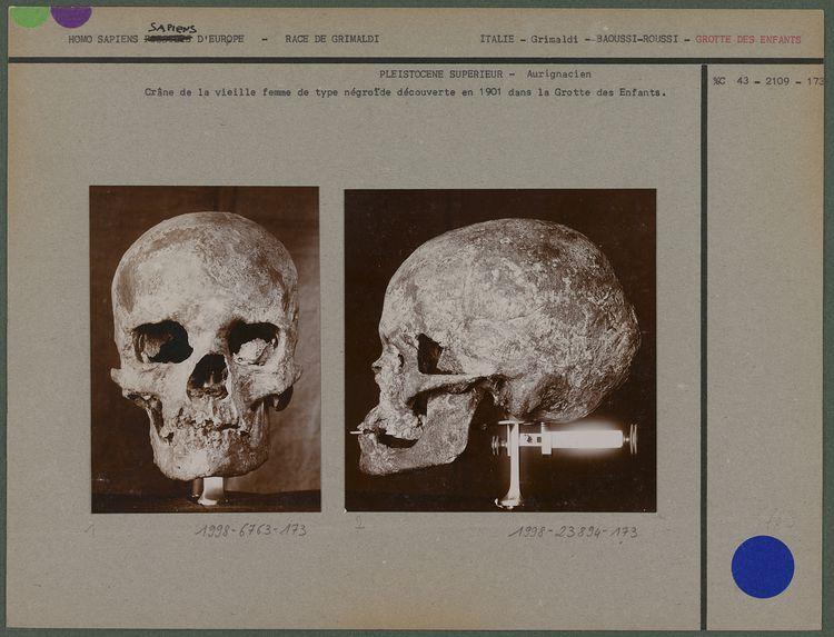 Crâne de la vieille femme de type négroïde
