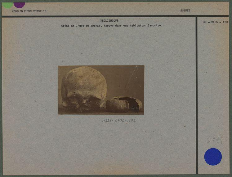 Crâne de l'âge du bronze découvert dans une habitation lacustre