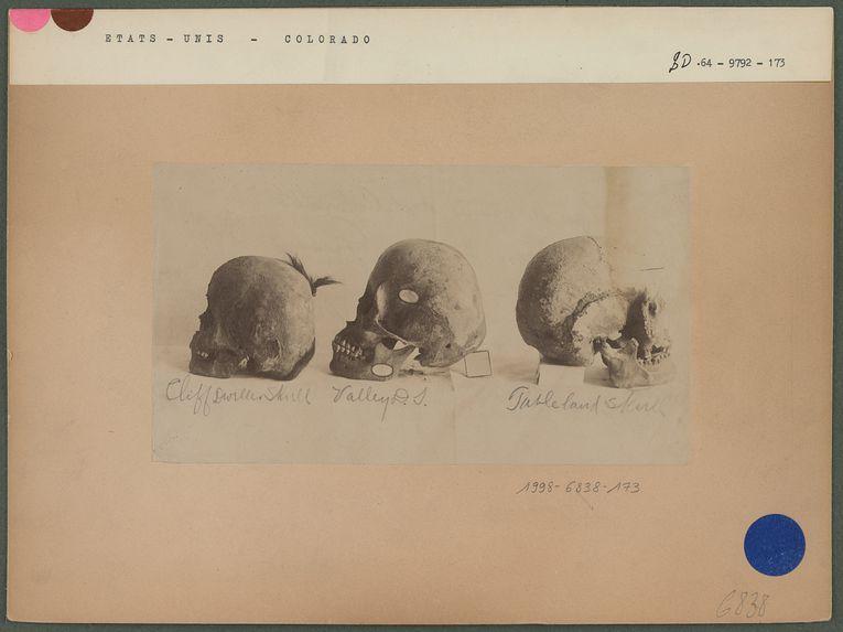 Types de crânes du Colorado