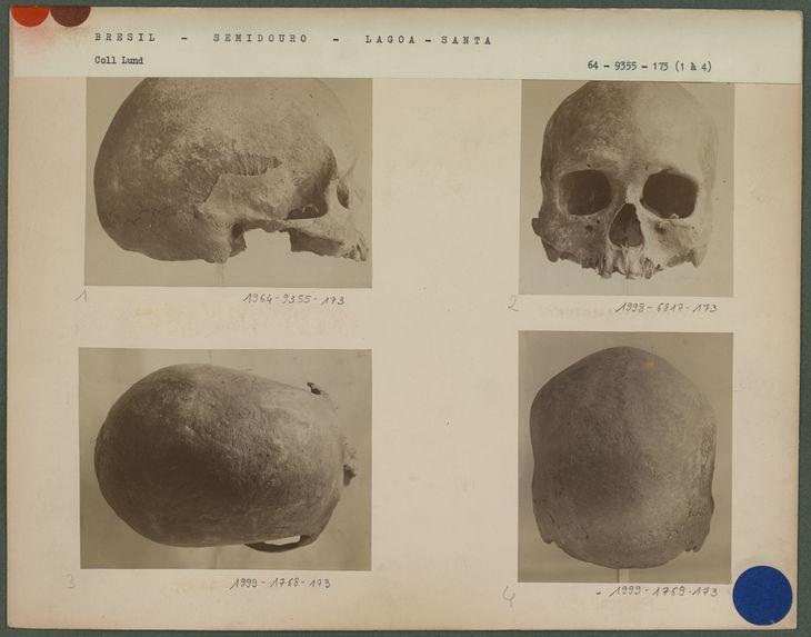 Crâne fossile de la caverne de Sumidouro