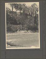 Pont de palmier sur l'Oued