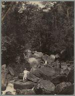 Guadeloupe ; torrent en forêt