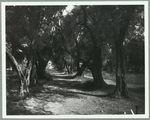 Maroc [arbres et chemin]