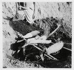 Chimbuluk. Hauteur où sont enterrés les ignames dans un asarun?