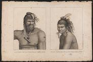 Sauvage de la Nouvelle-Zélande - Jeune sauvage de la Nouvelle-Zélande