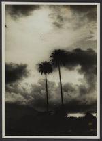 Mission IFAN Dekeyser-Holas au Libéria en 1948 [Palmiers et ciel nuageux]