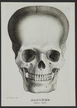 Crâne de Natchez