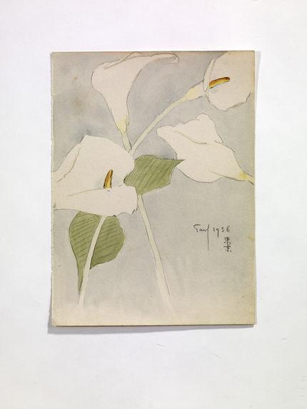 4 Callas [4 arums (Zantedeschia aethiopica)]