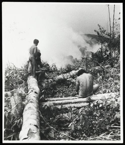 Sans titre [Abattage des arbres en vue de la fabrication de curiaras]