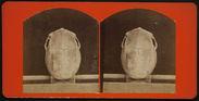Vertical View of a Cranium